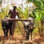 African farming.jpg